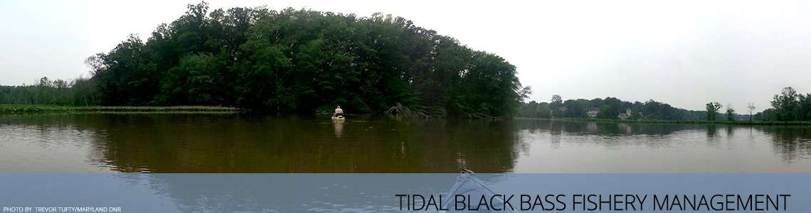 Tidal Black Bass Fishery Management in the Potomac River