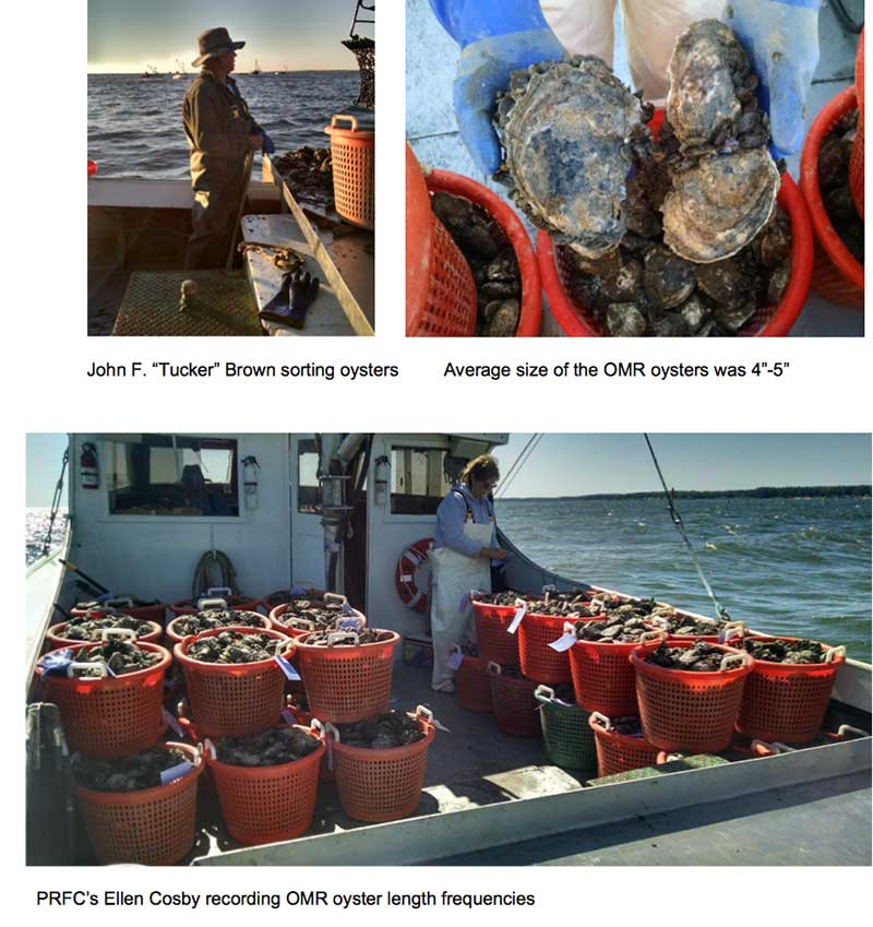 Oyster pictures